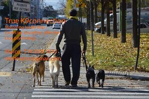 Dressage Canin - *Problèmes de Comportements*