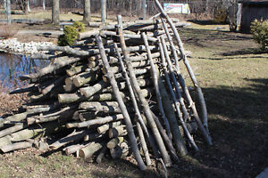Dry Firewood Peterborough Peterborough Area image 6