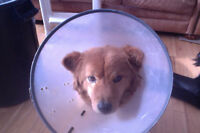 Cone for dog