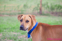 Dixie s gentle and sweet with children..She is 1 yr old