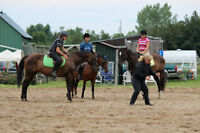 Horseback riding lessons for beginners to advanced