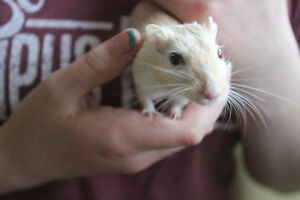$1.00 a Day Small Animal Pet Sitting! London Ontario image 7