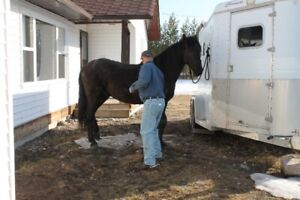 Oklahoma trained farrier trimming in Beaverly /Blackwater