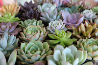 HUGE Succulent & Cactus Plant Sale May 30th - June 2nd
