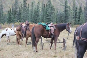 Mountain Horses for Guide/Outfitter Prince George British Columbia image 8