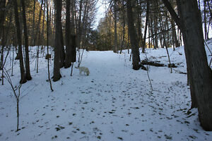 Private Dog Care Book Now For Fall - Limited Spaces Kawartha Lakes Peterborough Area image 6