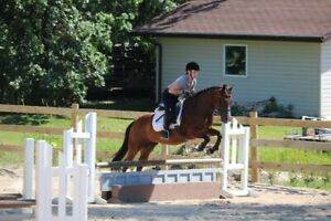 Riding Lessons, Dressage, Flatwork for Jumping, Eventing