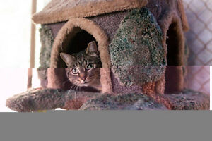 Cats and Kittens for Adoption! Sarnia Sarnia Area image 9