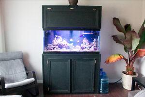 Custom 75 gallon saltwater aquarium
