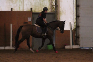 OTTB mare for part board