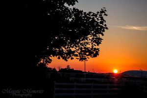 Majestic Memories Photography-just starting out Cambridge Kitchener Area image 1
