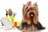 Professional Groomer and Dog Bather positions
