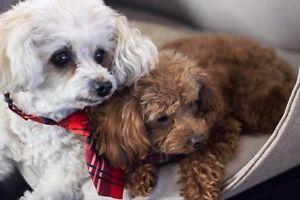 Pet sitter   dog keeper  West Island Greater Montréal image 3