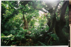 16ft X 10.5ft Vinyl Tropical Forest Film/Photography Backdrop.