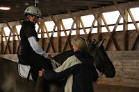 Horse Riding and Groundwork Clinic May 29-31