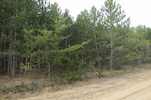 Treed land walking distance from town!