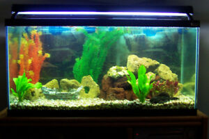 Hagen 95 Gallon Fish Tank + 3-in-1 CoraLife Aquarium Light + Acc