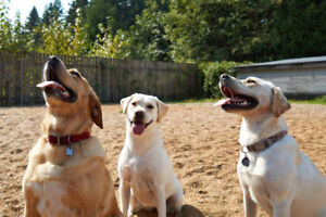Part Time Animal Care Workers needed ASAP - ideal for students