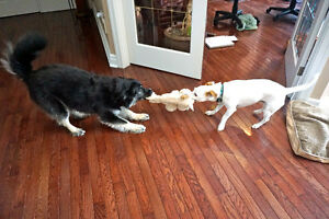 Professional Family Style, In-Home Dog Sitting Service London Ontario image 7
