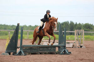 Horse for sale - Six year old hunter or event prospect