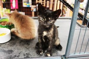 Kittens up for Adoption by Rescue
