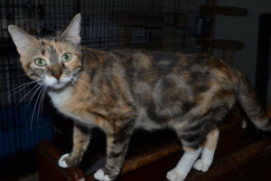Cats available for adoption at Whiskers
