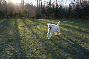 Professional Family Style, In-Home Dog Sitting Service London Ontario image 9