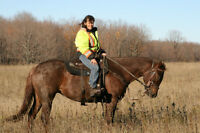Trail Horse or Brood Mare
