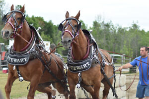 TEAM OF BELGIAN GELDINGS