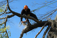Certified Tree Worker or Certified Arborist