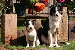 Dog friendly acreage around Salmon Arm area needed.