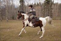 Amazing everything horse