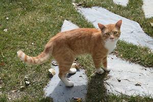 Free male farm cat