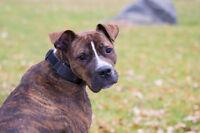 Fred, le chien négligé pendant un an, se cherche une maison !