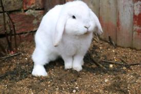 2 adorable rabbit for sale