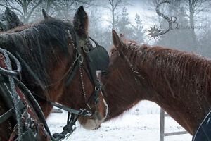 Horseback Riding - All Year Long! London Ontario image 4