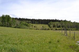 Beautiful 50 acres overlooking Big Lake Williams Lake Cariboo Area image 10