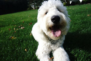Professional Family Style, In-Home Dog Sitting Service London Ontario image 4