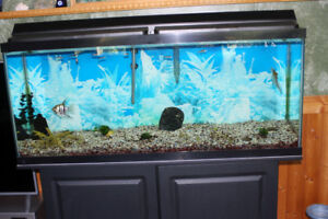 55gal aquarium with stand, filter, heater and few fishes