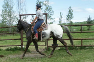 experienced confident pleasure trail horse