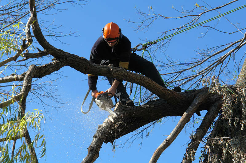 Steps to Follow in the Tree Removal Process