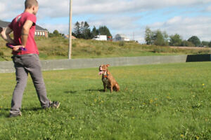 Dog Training / Services