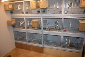 Looking for finches/canary breeding cages