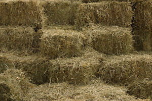 Grains and hay for sale