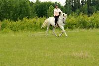 Gaited Horse Trainer