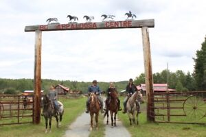 Riding Horse Rental Business
