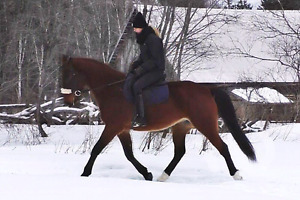 Jarmo 16.3 hh horse for sale