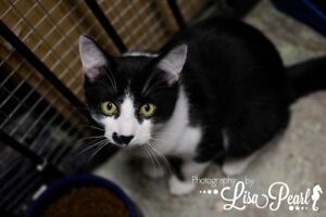 Ron Wesley is looking for Furever home from Rescue