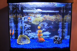 Nice Aquarium with 4 gold fishes, with everything