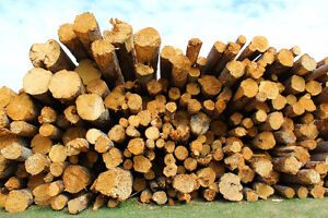 Split Firewood and Logtruck Loads For Sale
